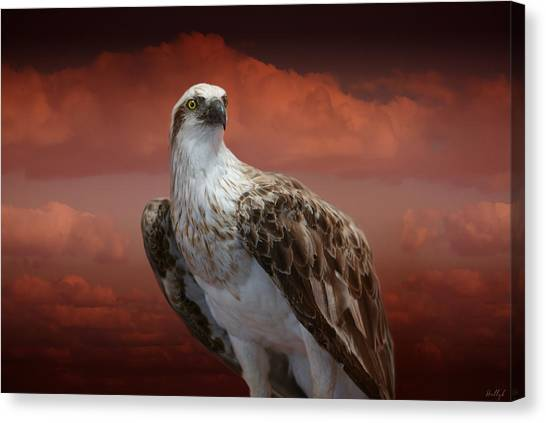 Canvas Print - The Glory Of An Eagle by Holly Kempe