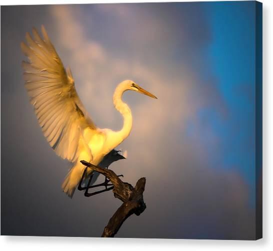 The Golden Egret Canvas Print