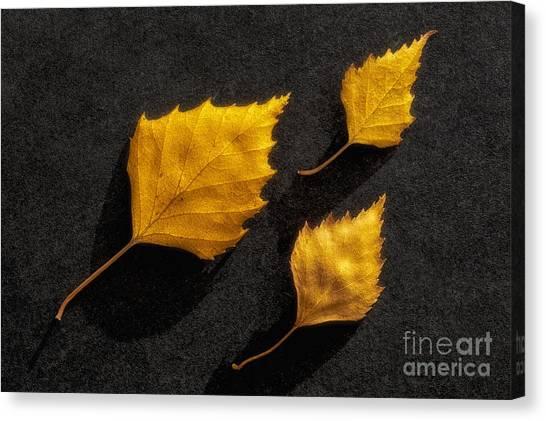 Birch Canvas Print - The Golden Leaves by Veikko Suikkanen