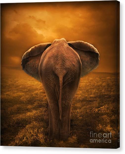 The Golden Savanna Canvas Print by Lynn Jackson