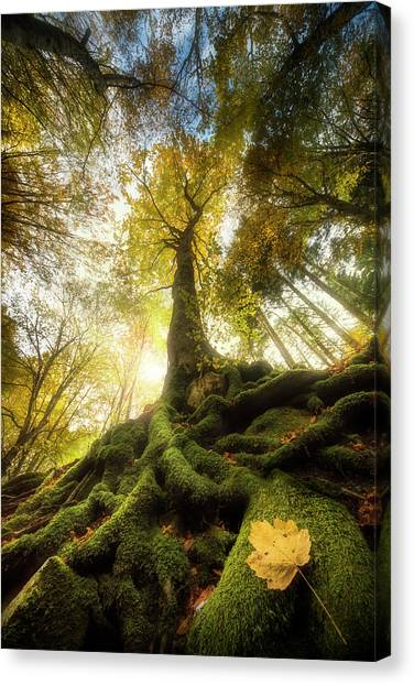 Autumn Leaves Canvas Print - The Goodbye Of A Leaf by Alberto Ghizzi Panizza