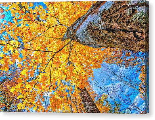 The Gorgeous Fall Canvas Print