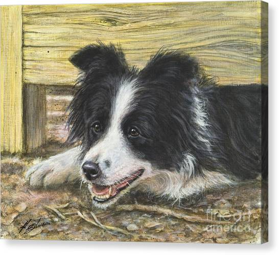 Border Collies Canvas Print - The Great Escape by John Silver
