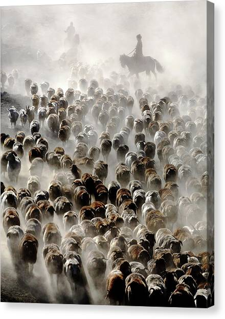 Cowboy Canvas Print - The Great Migration Of China by Adam Wong
