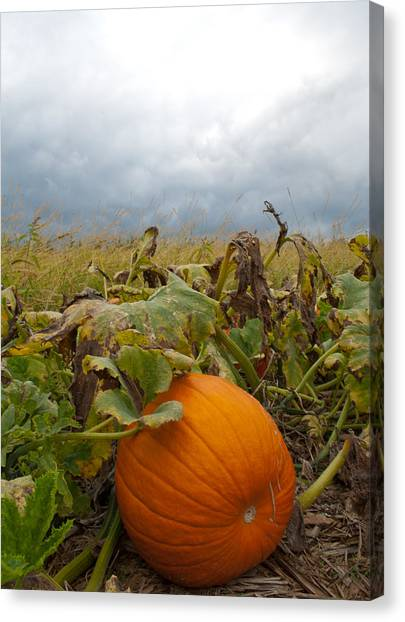 The Great Pumpkin Canvas Print