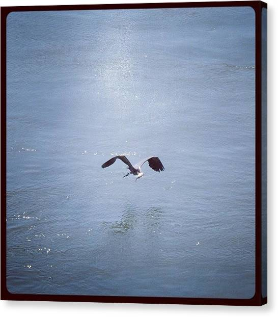 Herons Canvas Print - The #greatblueheron Caught A #fish by Robb Needham