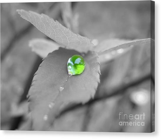 The Green Pearl Canvas Print