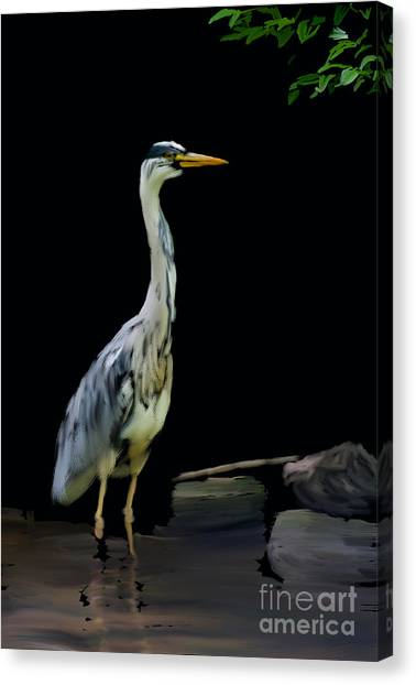 The Grey Heron Canvas Print