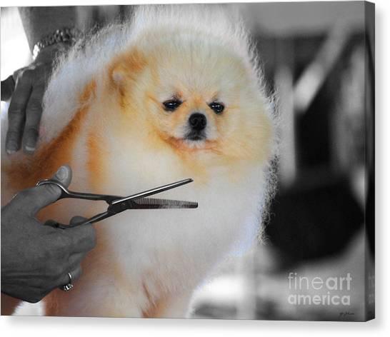 Pomeranians Canvas Print - The Groomer by Jai Johnson
