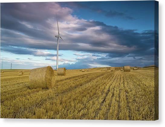 Sunderland Canvas Print - The Harvest by Ricky Schonewald