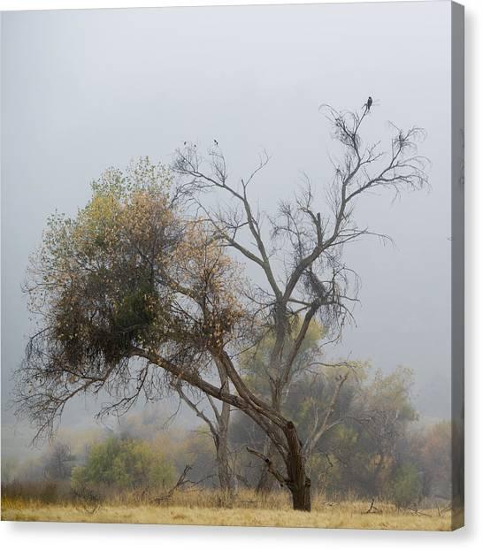 The Hawk Canvas Print by Darin McQuoid