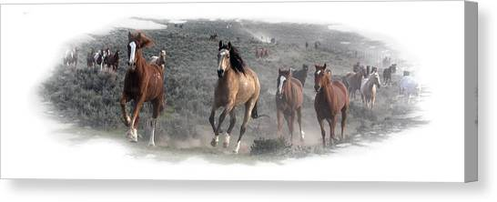 The Herd Is Coming Canvas Print