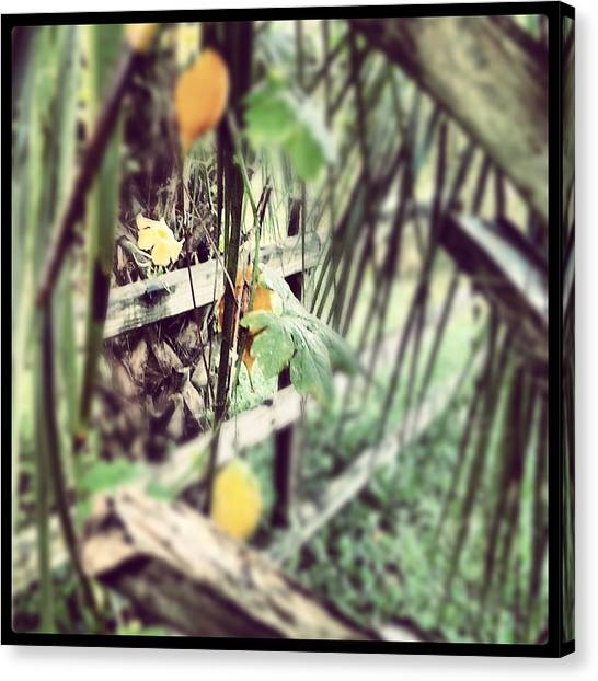 The Hidden Fence Canvas Print by Chasity Johnson