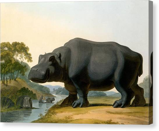 Hippos Canvas Print - The Hippopotamus, 1804 by Samuel Daniell