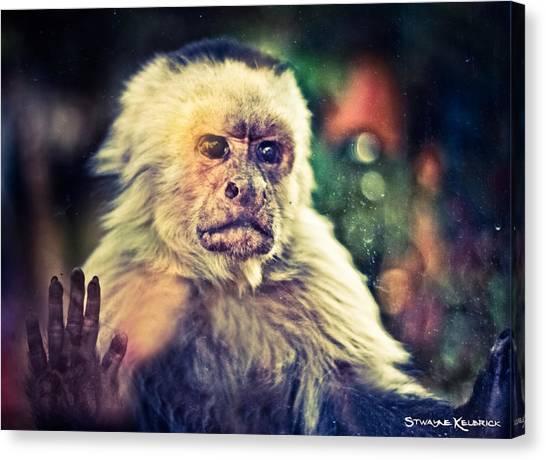 Canvas Print featuring the photograph The Hopeless Ape by Stwayne Keubrick