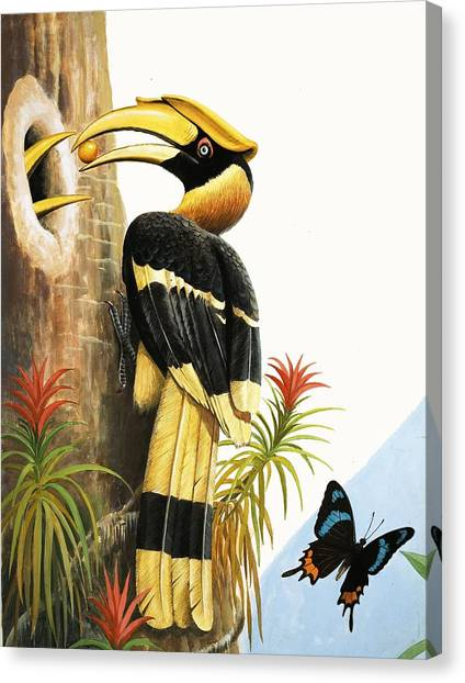 Toucans Canvas Print - The Hornbill by RB Davis