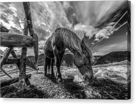 Farming Canvas Print - The Horse by Faris