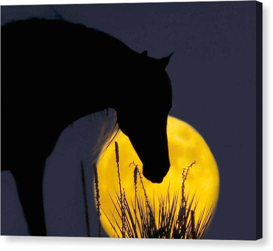 The Horse In The Moon Canvas Print