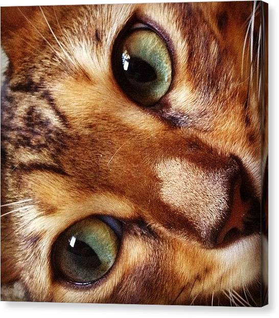 Bengals Canvas Print - The House #cat - I Normally Don't by Andrew Mowat