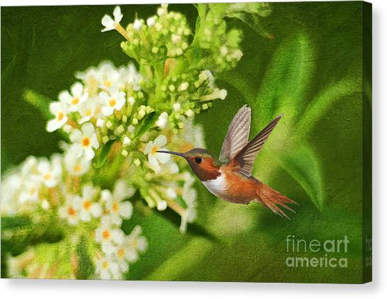 Selasphorus Canvas Print - The Hummer And The Butterfly Bush by Darren Fisher