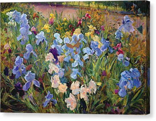 In Bloom Canvas Print - The Iris Bed by Timothy Easton