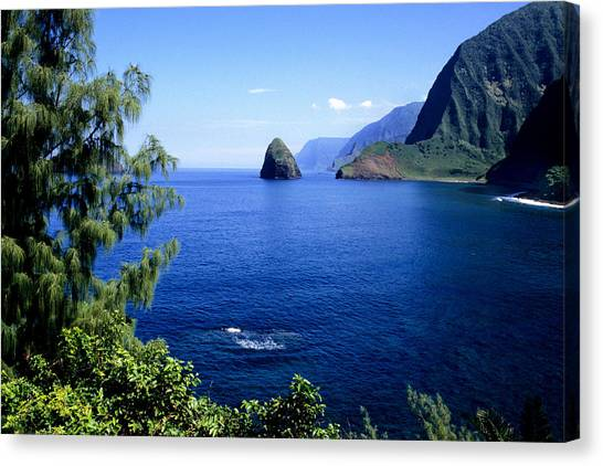 Kalaupapa Cliffs Canvas Print - The Island Of Molokai, Hawaii by David R. Frazier