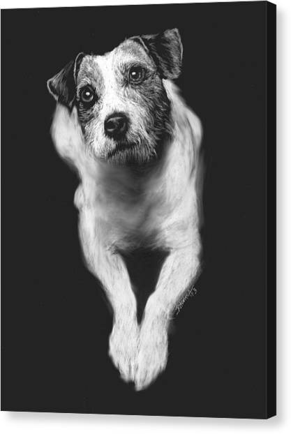 The Jack Russell Stare- Got Ball? Canvas Print