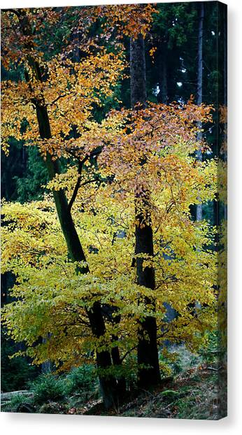The Joy Of Being In Autumn Canvas Print by Mah FineArt