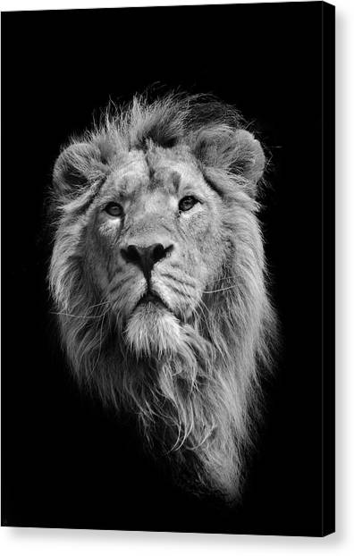 The King Asiatic Lion Canvas Print
