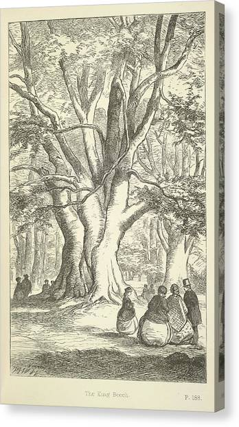 E.t Canvas Print - The King Beech by British Library