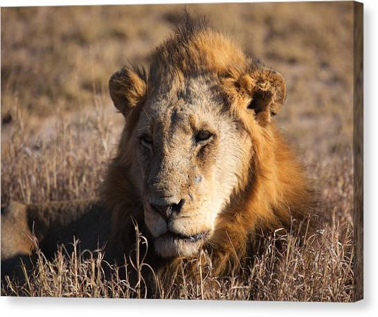 The King Canvas Print by Craig Brown