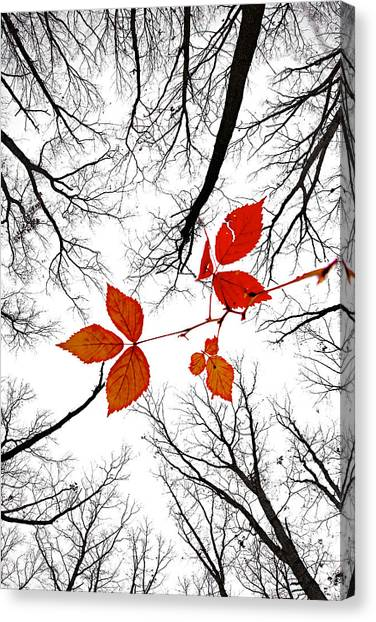 The Last Leaves Of November Canvas Print
