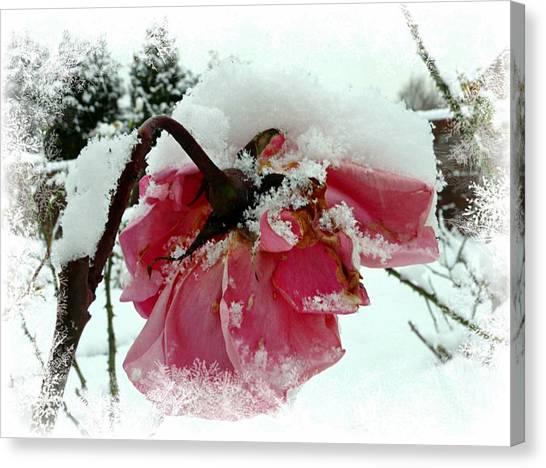 The Last Rose Canvas Print