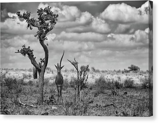 Kenyan Canvas Print - The Last Unicorn by Marcel Rebro