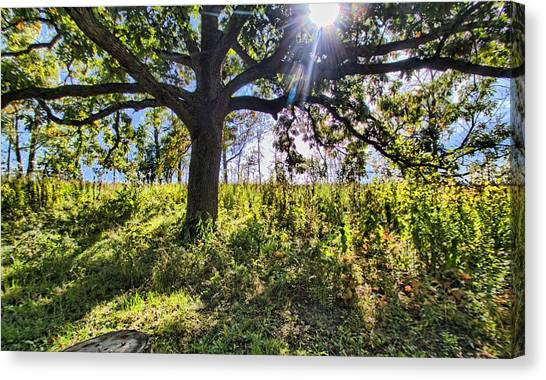 The Learning Tree Canvas Print