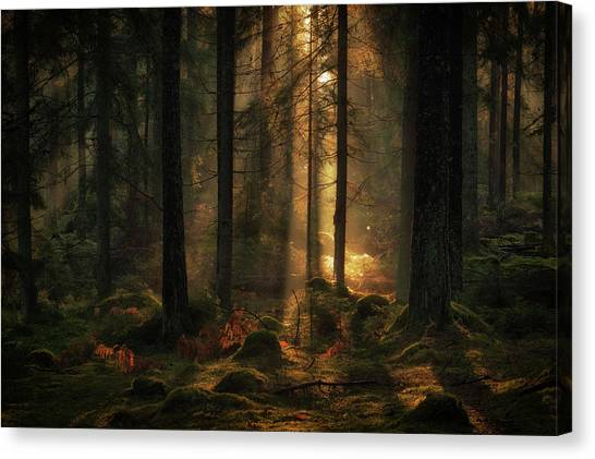 Sweden Canvas Print - The Light In The Forest by Allan Wallberg