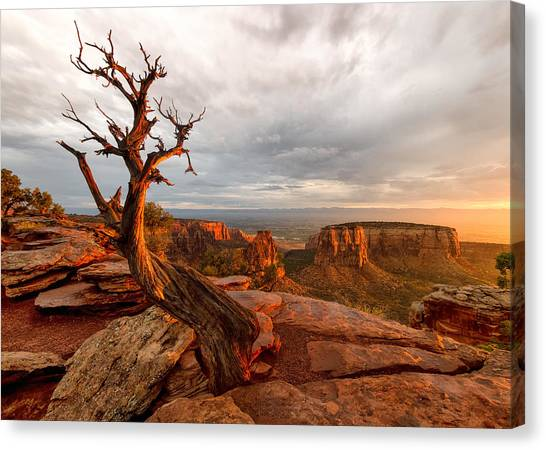 The Light On The Crooked Old Tree Canvas Print