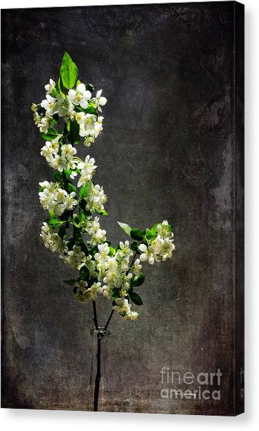 The Light Season Canvas Print