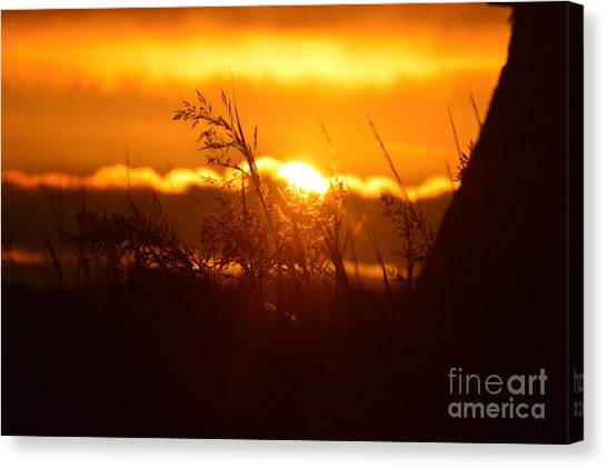 The Light Shines Canvas Print by Sheldon Blackwell