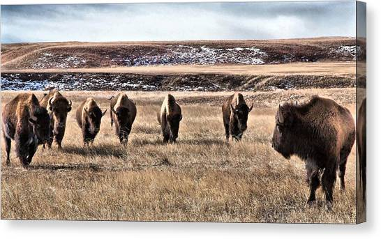 The Lineup Canvas Print