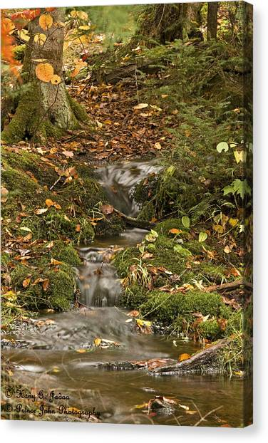 The Little Brook That Could Canvas Print