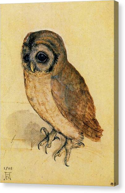 The Little Owl Canvas Print