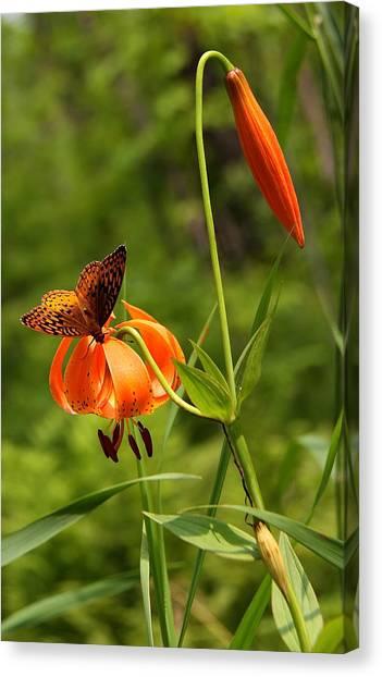 Minnesota Wild Canvas Print - The Little Things.... by Susan Crossman Buscho