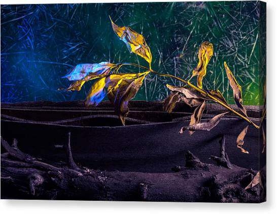 The Lonely Branch Canvas Print