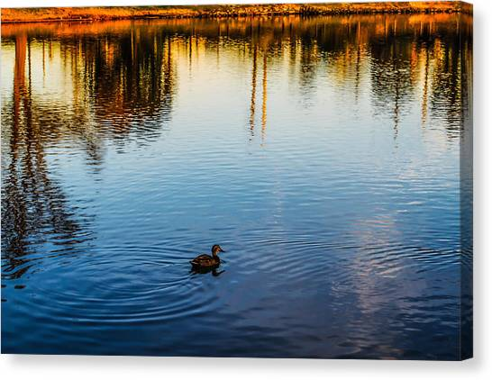 The Lonely Duck  Canvas Print
