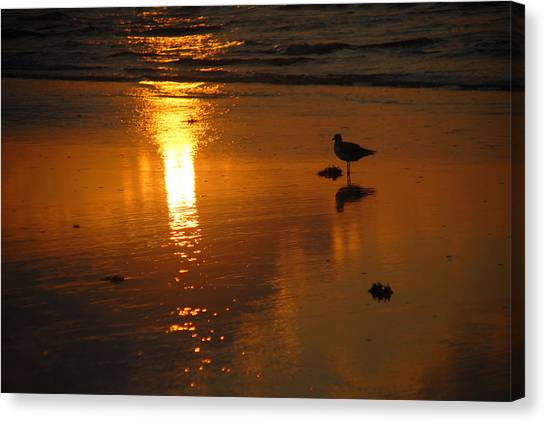 The Lonely Seagull Canvas Print