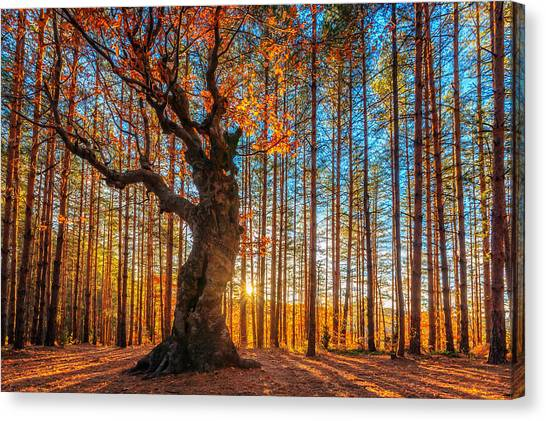 The Lord Of The Trees Canvas Print