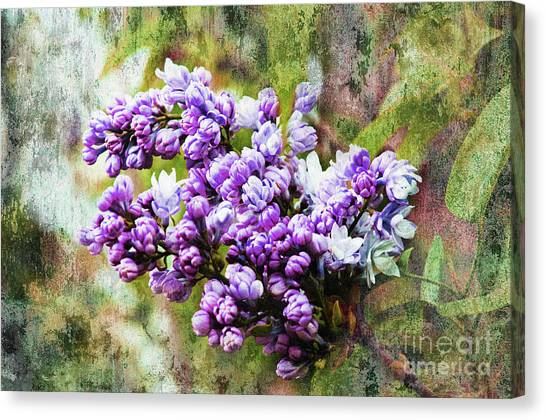 Lilac Bush Canvas Print - The Lovely Lilac by Andee Design
