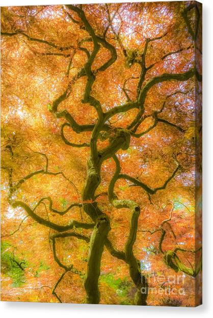 The Magic Forest-15 Canvas Print