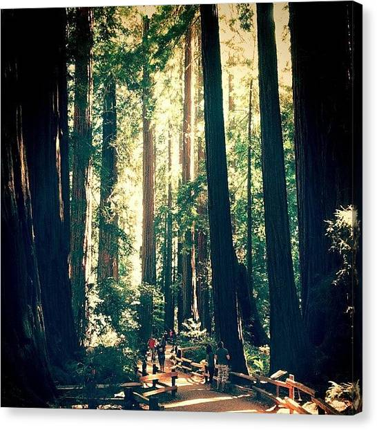 Redwood Forest Canvas Print - The Majestic #redwoods At #muirwoods In by M H